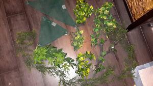 Fake Terrarium plants and hammocks