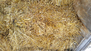 Square Bales Oat Straw mixed Oat Green Feed