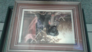 Professionally framed Dog Picture