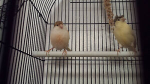 Great deal on 2 canary Including cage and food