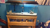 55 Gallon Fish Tank with Stand/Accessories