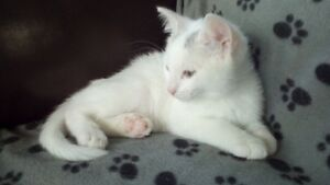 Cute kitten looking for a good home - Free.