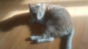 Adult cat free to good home