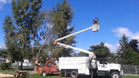 AAV TREE SERVICES