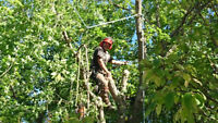 """""""lookup"""" pruning or tree removal"""