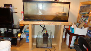 2 turtles with 77 gallon tank for sale