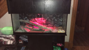 Bearded dragon and large tank and stand with accessories