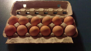 Eggs for Sale - TAPPE BC