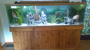Beautiful 130 gal. fish tank for sale