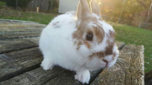 Bunnies Bunnies Bunnies - Find a perfect one to join your family