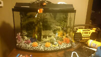 55gal bow front fish tank