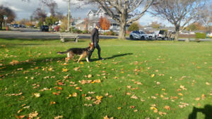 SIT Dog Training,  Obedience, Rehabilitation and Walking
