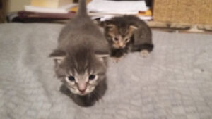 new born kittens