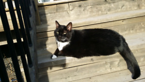 Lost Black Cat South End
