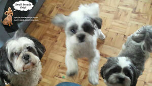 *FULL FOR HOLIDAYS*CAGE-FREE FAMILY HOME FOR SMALL DOGS ALL YEAR West Island Greater Montréal image 5