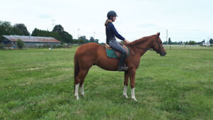 6 horses and ponies for sale. 1500.00 and up