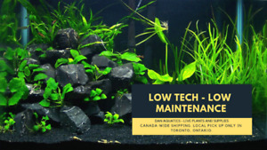Easy Aquatic Plants, Dry Goods and Snails!