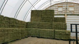 Small squares horse quality hay