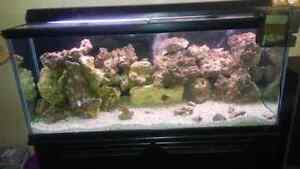 Need saltwater fish and enemes