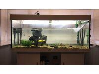 Juwel 4ft special Edition Tank w/ Enheim Filter