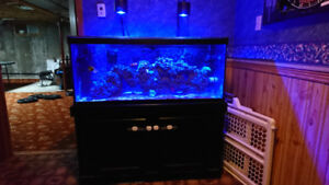 75 gallon tank with stand