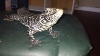 Reptile shows for all ages Including christmas partys and events