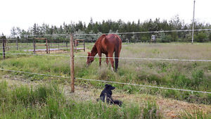 Dog walking/ House sitting/ Lawn Maintance Prince George British Columbia image 1