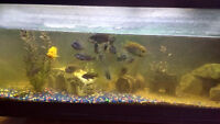 70 GALLON  FISH TANK WITH EVERYTHING FREE