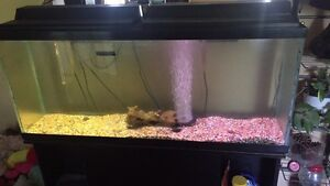 55G tank with everything