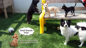 Going away? Need a fun place for your SMALL dog to stay? West Island Greater Montréal image 2