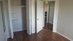 Looking for a roommate