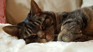 Need A Cat Sitter? - Contact West Island Cats!