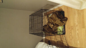 Large dog crate 36 inch