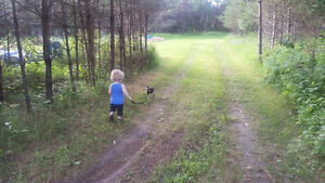 Montie lost chihuahua short haired dog Kawartha Lakes Peterborough Area image 2