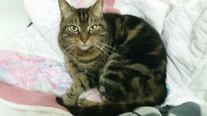FREE Adult Male Cat for Rehoming