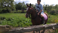 Riding Lessons and Summer Camp