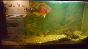 Fish Tank for Sale. 60 Gallon, Stand and lights included.