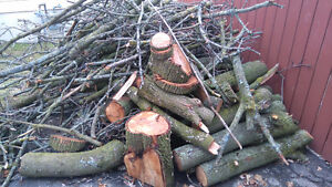 Free Maple Logs for Firewood