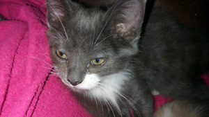 AVAILABLE: KITTENS