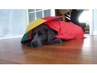 Dogs XXL red rain mac