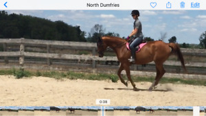 3 horses available for PB/Lease possible sale