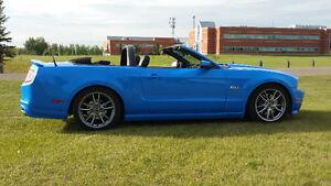 2011 Ford Mustang 5.0L GT Convertible 6 SPD Mint!!  Grabber Blue Edmonton Edmonton Area image 10