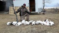 snow goose hunting outfitters spring 2019 quebec / ontario