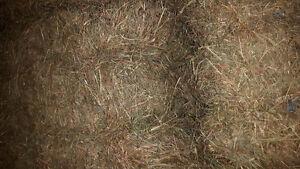 Second cut hay