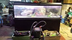 135  gallon tank with black stand