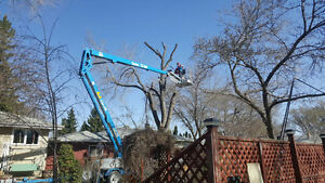 Ajs tree removal and yard clean up Regina Regina Area image 2