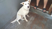 Beautiful  8 month old female pup to good home