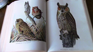 Birds of America, 1917, 1936, 106 Full Color Plates Kitchener / Waterloo Kitchener Area image 5