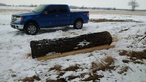 Honey Locust Log
