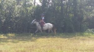 very fancy QH/tb 4yr grey gelding started over 2ft